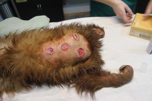 poorly sloth