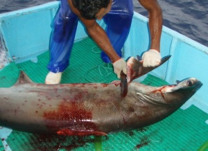 Shark FInning Costa Rica