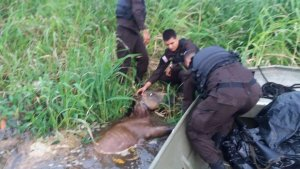 Brave Costa Rican Police Rescue Young Foul from the Jaws of Crocodiles