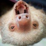 kermie-upside-down-yawn-300x199