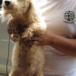puppy-mill-raid-cartago-costa-rica-august-7th-2014-14-206x300
