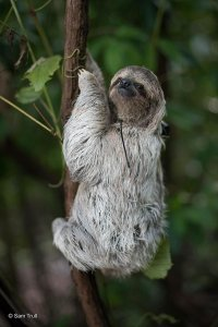 The Sloth Institute in Manuel Antonio Costa Rica