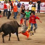 141224bullfight1
