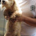 puppy-mill-raid-cartago-costa-rica-august-7th-2014-14-206x300