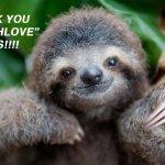boo-slothlove-thanks-copy